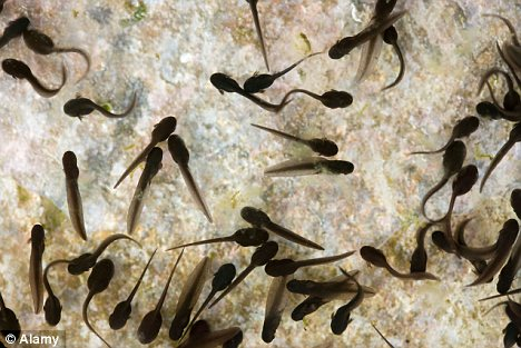 A South Korean woman tried to swallow a mouth full of tadpoles